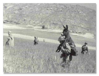 Ослы во Второй мировой история, Война, Животные, ослы, Интересное, факты