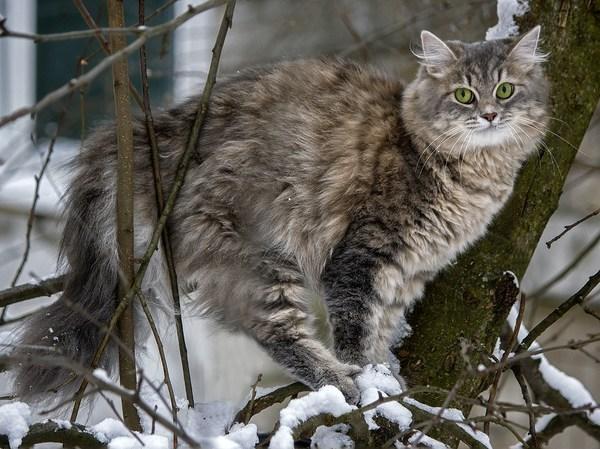 Кошка Масяня и снег 2 =) кот, снег, не мое, зима, длиннопост