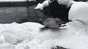 Кому морозы в тягость, а кому в радость Холодно, Мороз, Животные, Гифка