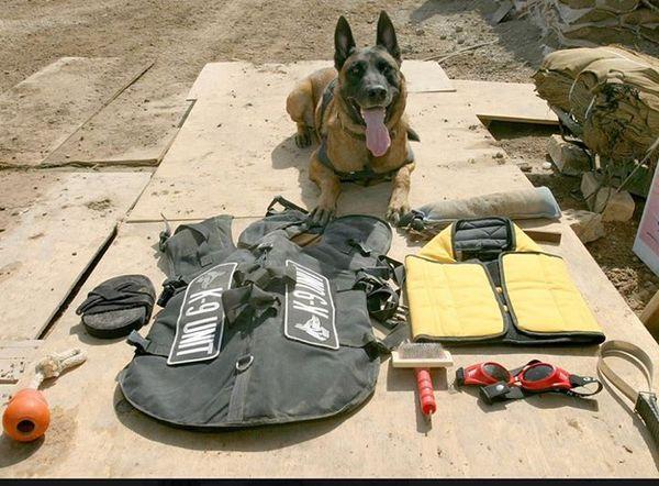 Снаряжение служебно-розыскной собаки Собака, Собаки на войне, Кинология, Служебные собаки, Взрывчатка