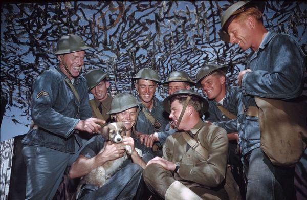 Солнечный реколор фотографии Второй мировой войны Собака, собаки на войне, США, вторая мировая война