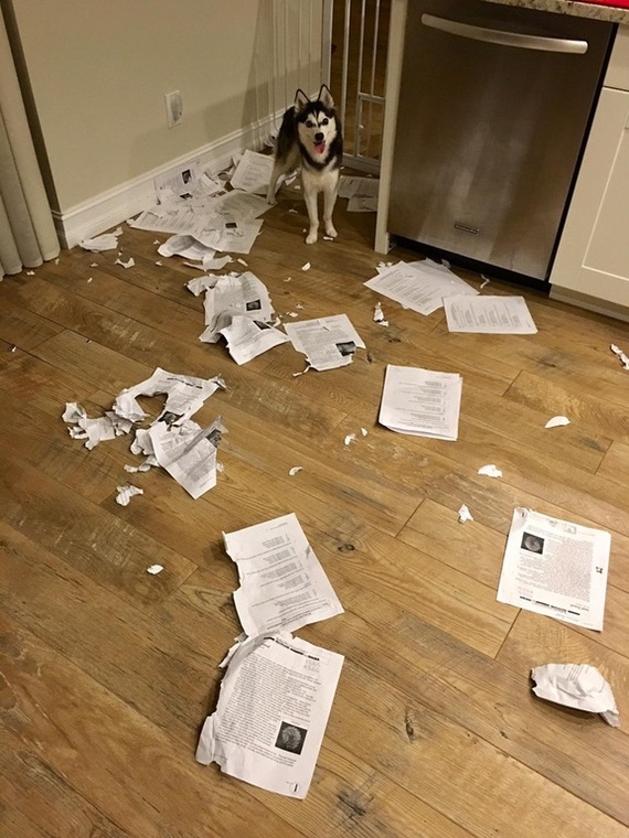 Извините класс, но все ваши работы съела собака