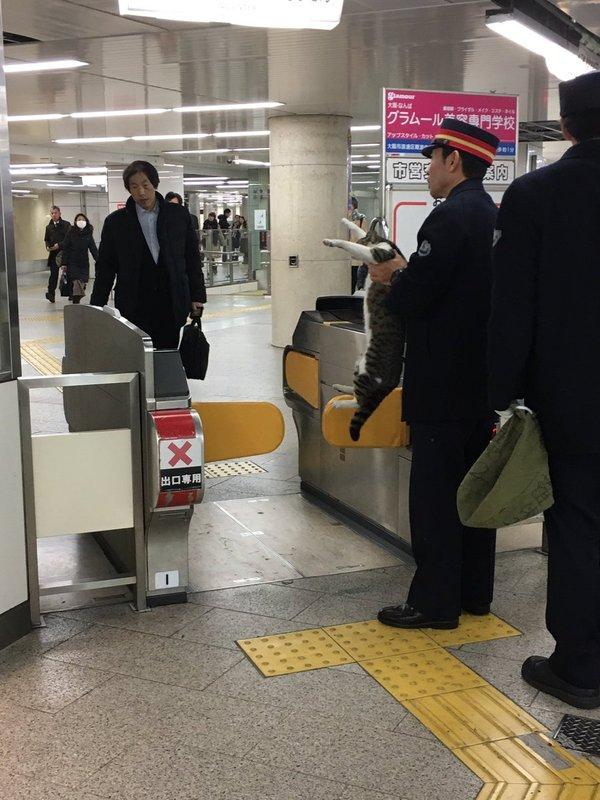 Снова на страже закона Фото, Метро, Кот, Осака, Японский интернет, Япония