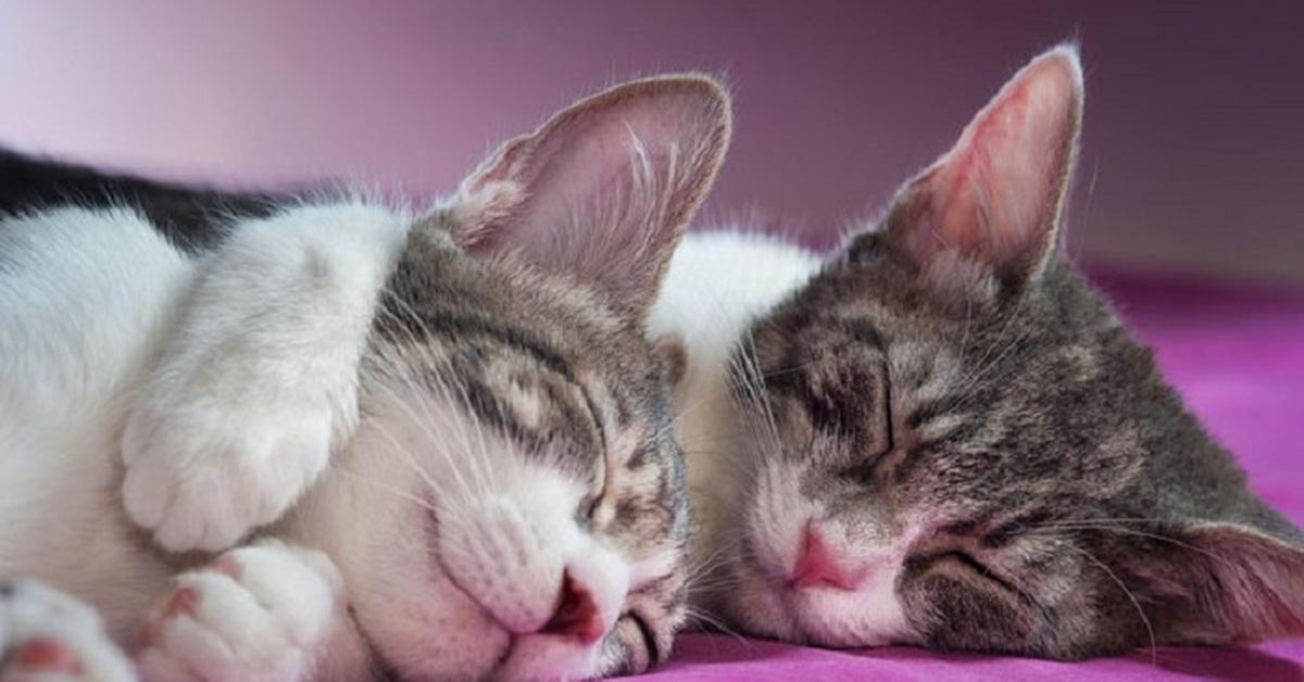 Картинка с целующимися кошками, пожелание спокойной ночи