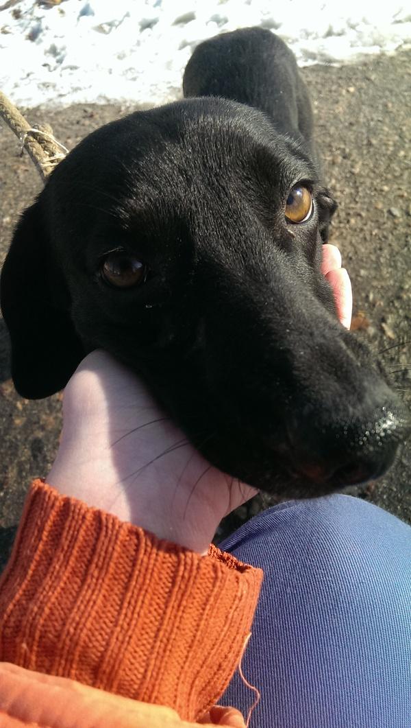Судьба собачки Найды Собака, найденыш, судьба собаки, найда, Помощь, помощь животным