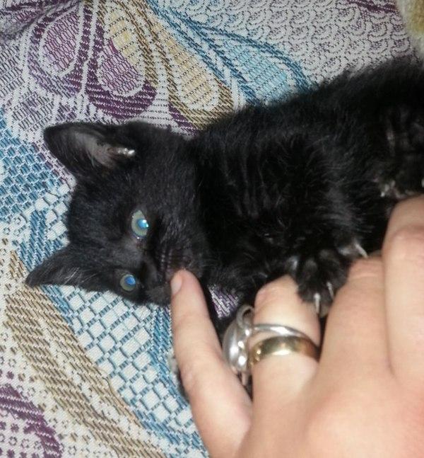 Ее и все семейство кошачье выкинул хозяин. Немного о предрассудках черный, кот, выбросил хозяин, предрассудки, Спасение, Луна, питомец, длиннопост