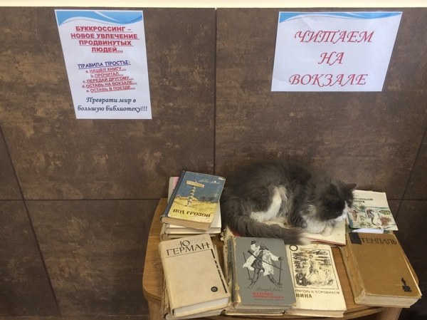 Букоткроссинг) буккроссинг, вокзал, кот, книги, Димитровград