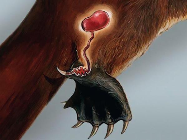 Млекопитающие, которые могут отравить ядом Ядовитые животные, млекопитающие, наука, биология, длиннопост, палеонтология, Эволюция