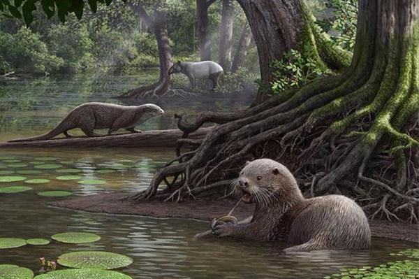 Найдены останки доисторической выдры размером с волка Палеонтология, Кайнозой, Выдра, Биология, Животные, Эволюция, Наука, Длиннопост