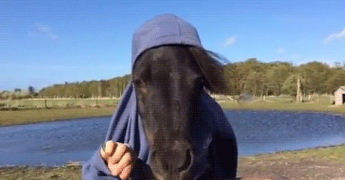 Гифки с лошадками смешные