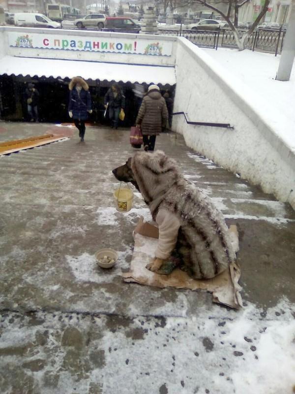 Люди добрый! сами мы не местные... Собака, Милостыня, Шакалы, Ростов-На-Дону, Длиннопост