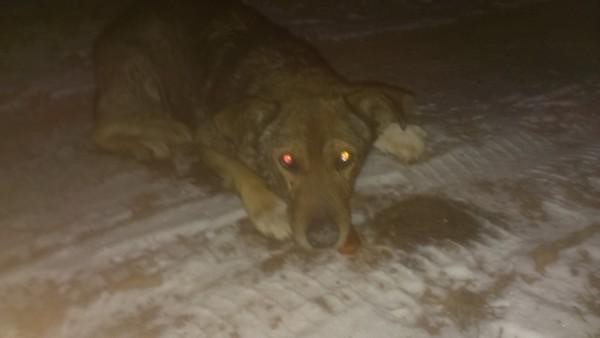 Пикабу, нужна помощь, что делать с уличным псом? Помощь, Животные, Собака, Помощь животным, Севастополь