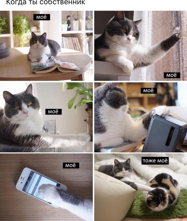 Собственник ВКонтакте, кот, моё, Нонемоё, Картинки, картинка с текстом