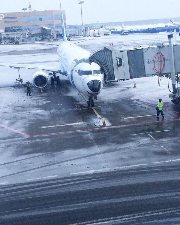Минутка нежности..) самолет, домодедово, минутка нежности
