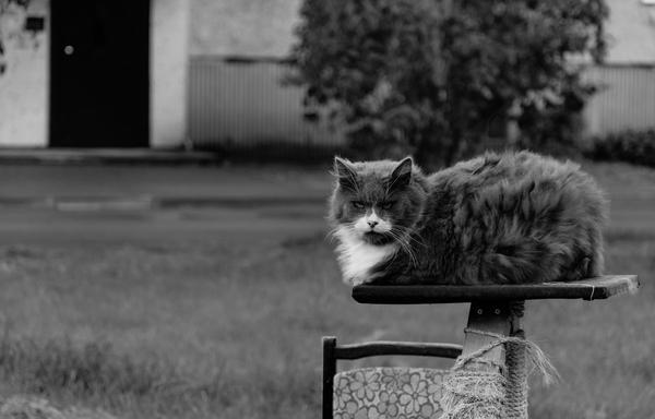 Охотник на котиков #1 Кот, Черно-Белое, Фотография, Усы, Ненависть