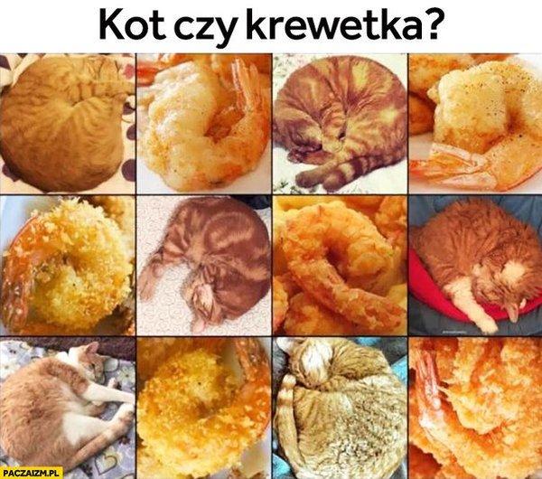 Кошка... или креветка?
