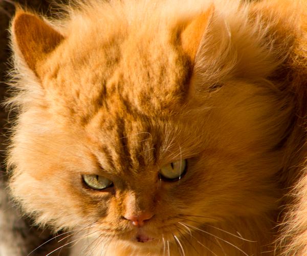 Кажется он задумал что-то недоброе кот, рыжий