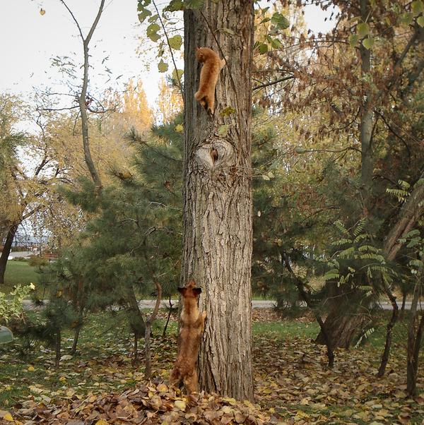 Я тебя достану! Собака, Кот, Фотография, Дерево, Мыльница