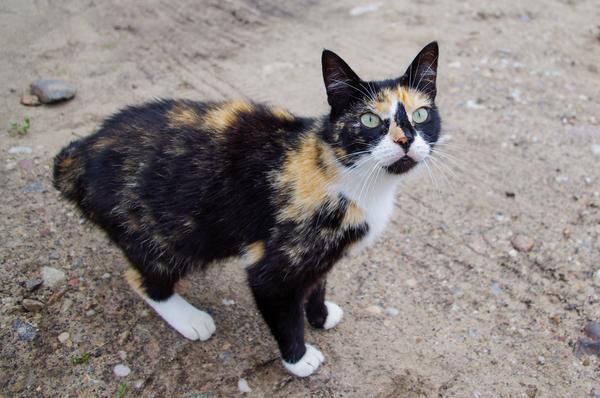 Охотник на котиков #3 Кот, Черепаха, Трехцветная кошка, Развод на кошачий корм