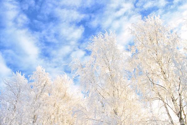 Зимняя сказка на родине М.В. Ломоносова фотография, Canon1100D, catharynphoto, Ломоносово, Архангельская область, длиннопост