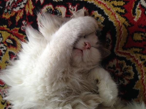 Когда хочешь поспать, но лень задёргивать шторы Кот, Сон, Утро