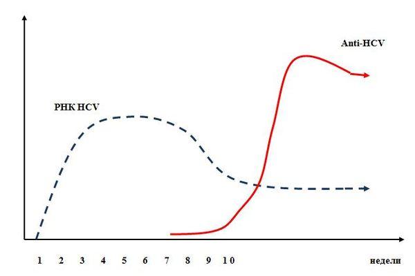 Диагностика вирусных гепатитов В, С и ВИЧ: почему бывают ошибки? ВИЧ, Гепатит с, Гепатит в, Гепатит, Анализ, Диагностика, Ошибка, Медицина, Длиннопост