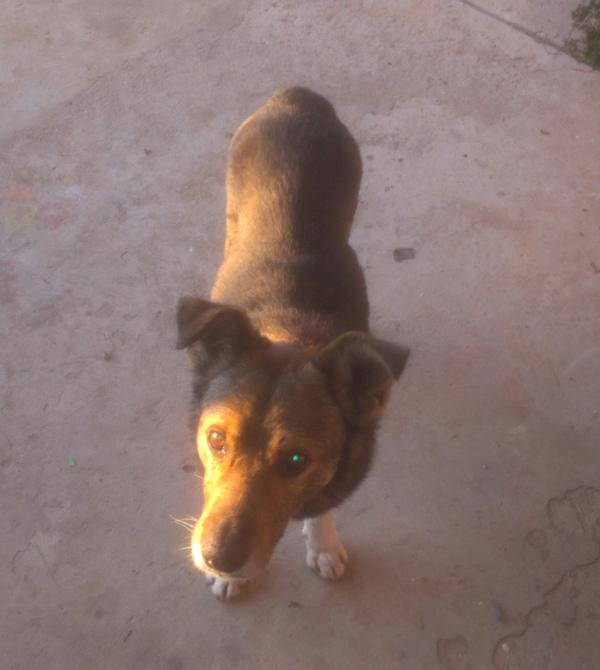 Об уличном псе, итог (для подписавшихся) Собака, Уличный, Помощь, Длиннопост