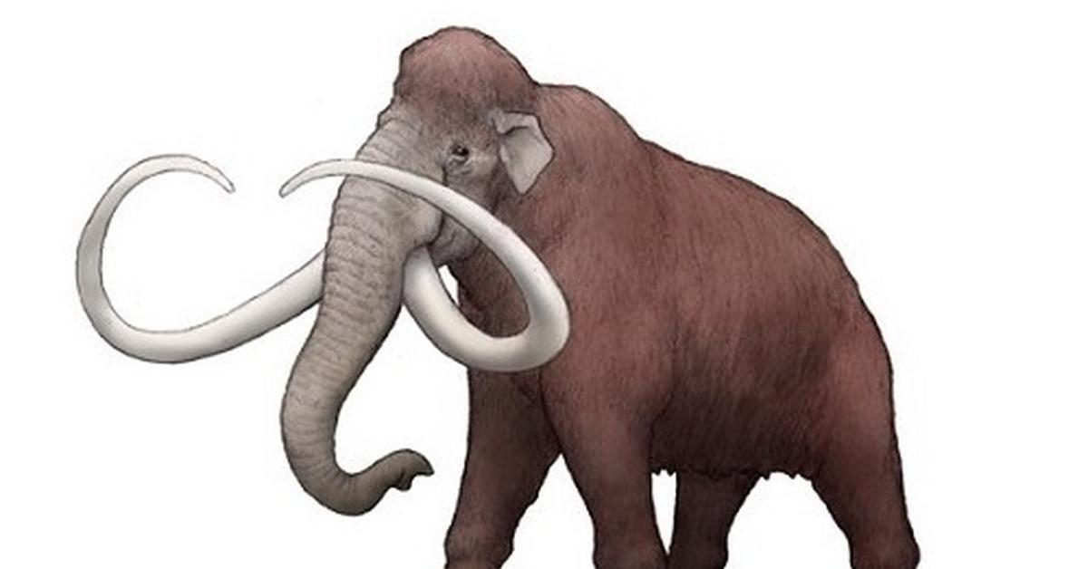 который ушел мамонт и слон сравнение картинки уже