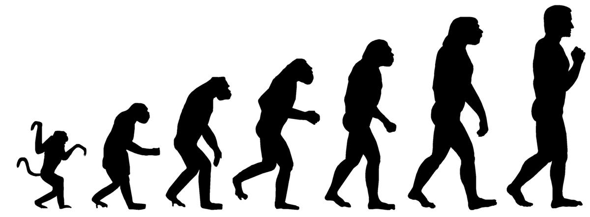 Эволюция дарвина в картинках