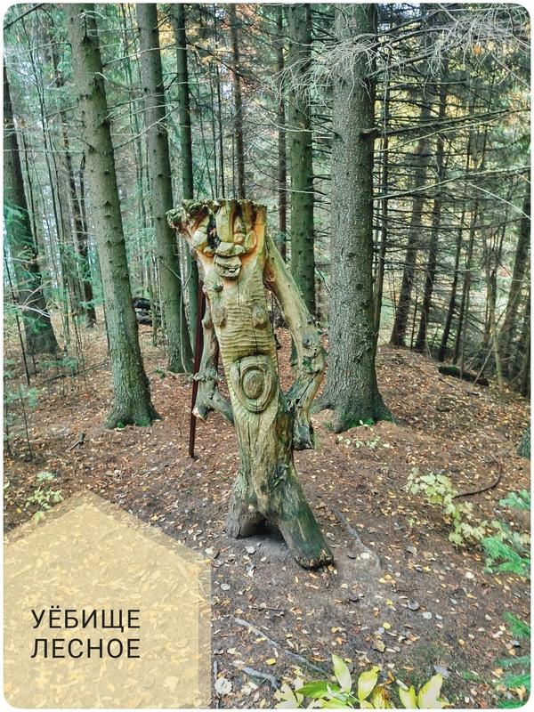 Худую бабку в лесу фото 580-657