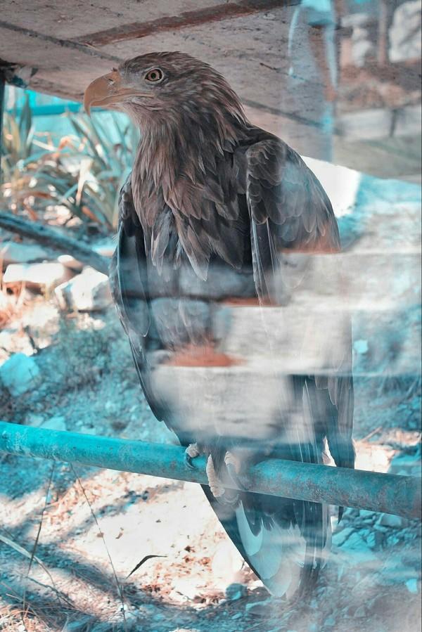 За стеклянной завесой Орел, Хищные птицы, Фотография, Сафари-Парк