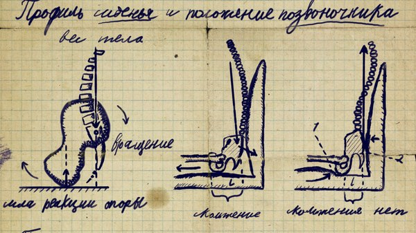 Профиль сиденья и положение позвоночника. Конспект лекции. Ленингад, 1957 г. Биомеханика, Эргономика, Дизайн, Человек