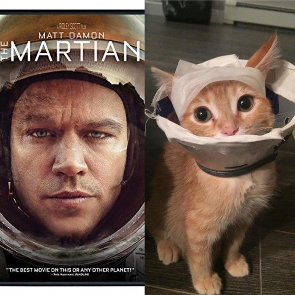 Марсианин. Кот, Животные, Фильмы, Мэтт Дэймон, Марсианин