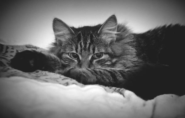 Кот DUSTER в обратно хронологическом порядке взросления Кот, Хронология, Животные, Sony a6000, Sel50f18, Длиннопост