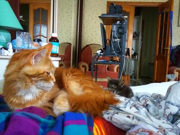 Ааам! Кот, Мейн-Кун, Хтонический ужос