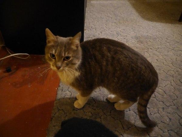 Пост кошачей помощи Киев, Помощь, помощь животным, кот, отдам в хорошие руки, текст, длиннопост