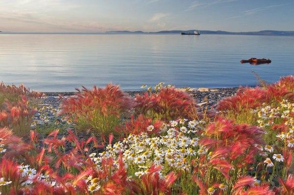 Берег моря Лаптевых Якутия, море лаптевых, Тикси, ромашки, Природа, фотография, пейзаж, Россия, длиннопост