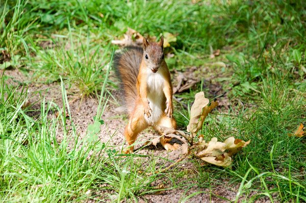Работа не белка, орешками не задобришь.