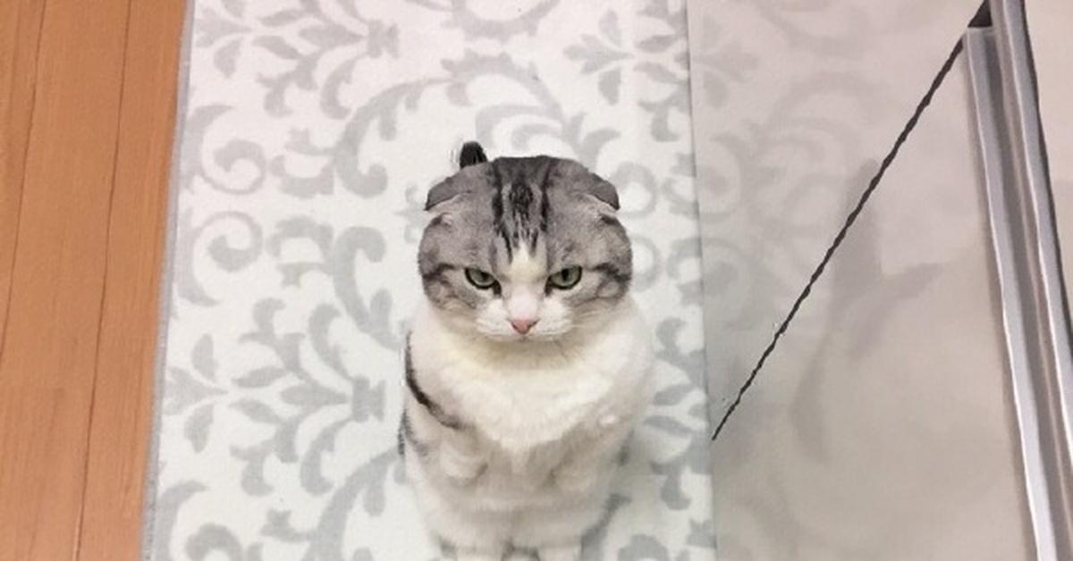 Кот похудел ест нормально
