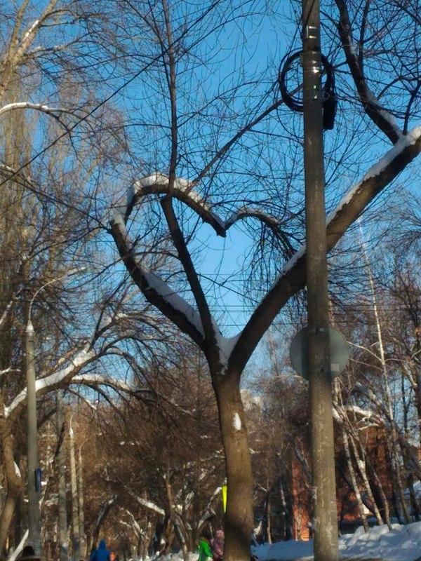 Дерево любви сердце, Природа, самара, День святого валентина, Любовь, длиннопост