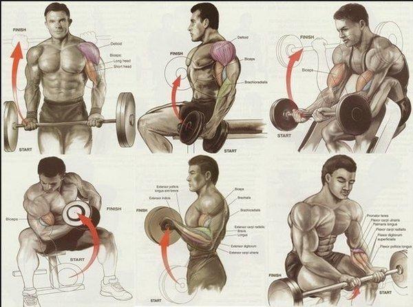 Качаем мышцы. Подробные картинки прокачки различных группы мышц Качаем мышцы правильно!, Прокачка мышц, тренировка, спортзал, длиннопост