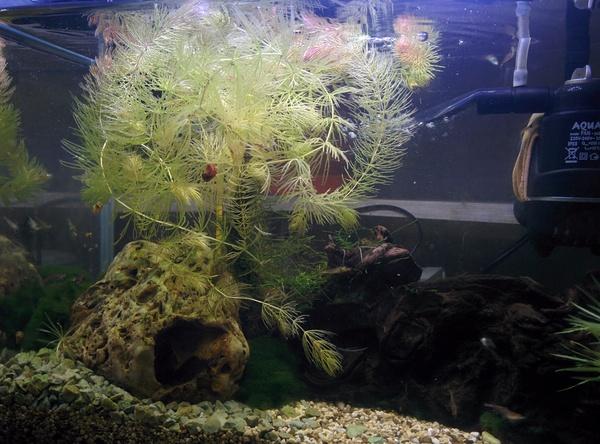 Зов к помощи аквариумистов Аквариум, Аквариумистика, Белые жучки