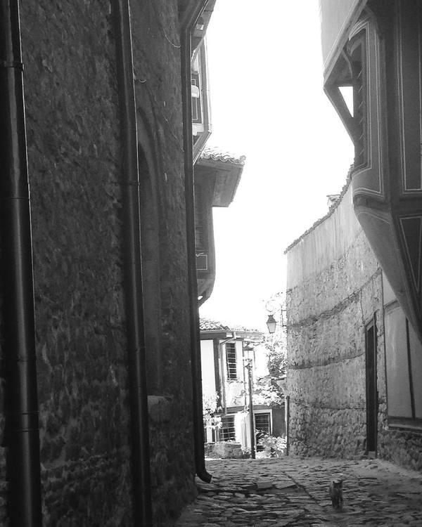Болгарский котейка Кот, Пловдив, Болгария, Черно-Белое фото, Туризм