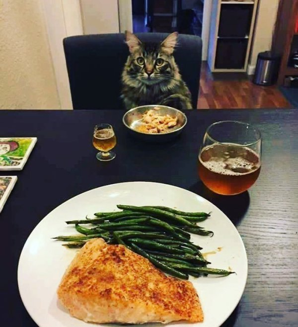 Когда нет других вариантов для совместного ужина.
