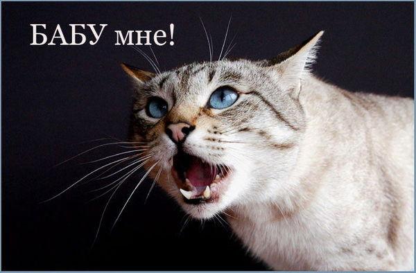 Кастрация 2.5-летнего кота на выгуле Кот, Кастрация