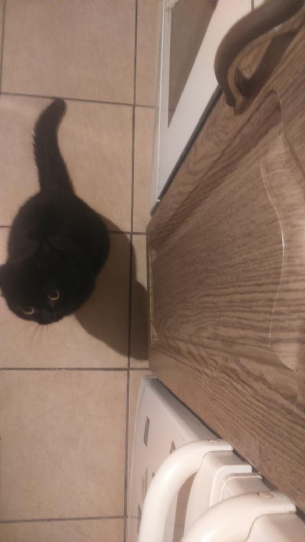 Приходишь на кухню,  и тебя встречает Кот, Милота, Длиннопост