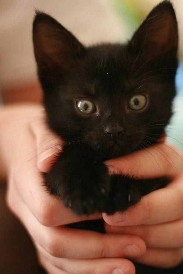 Наоми кот, фотография, питомец, несправедливость