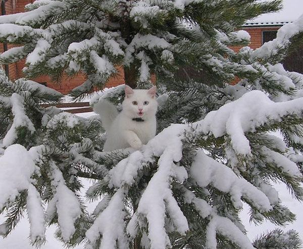 Снежок на елке.