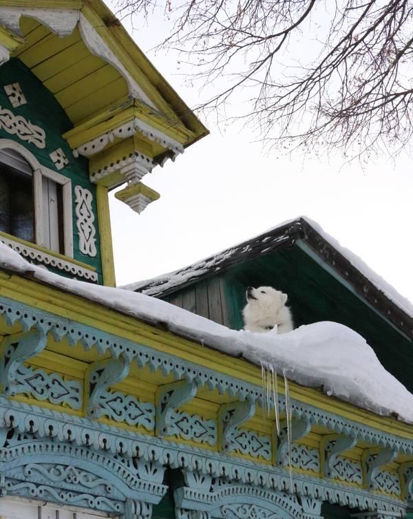 Перелётные собаки Зима, Собака, Фотоприкол, Так и живём, Снег, Длиннопост