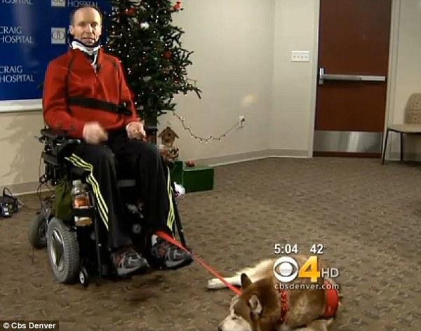 Хаски Джуно спасла жизнь своему хозяину. собака, спасла жизнь, горы, травма, верность, собачьи будни, длиннопост